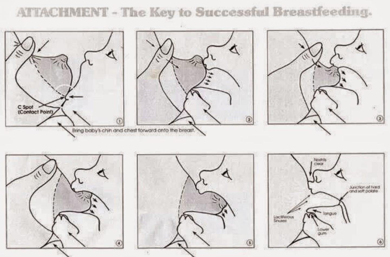 Breastfeeding latch guide