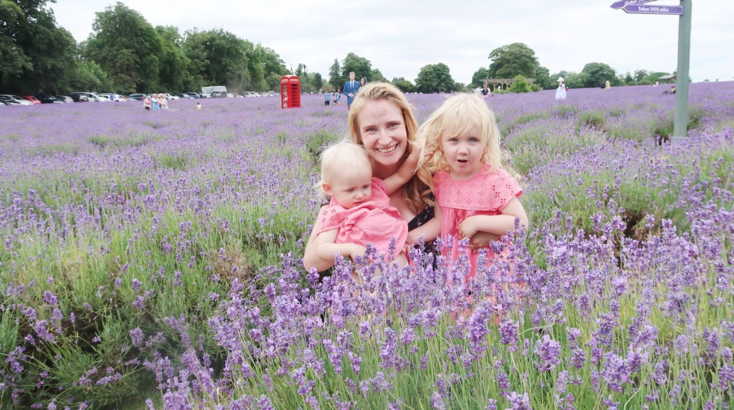 Mayfield Lavender Farm review