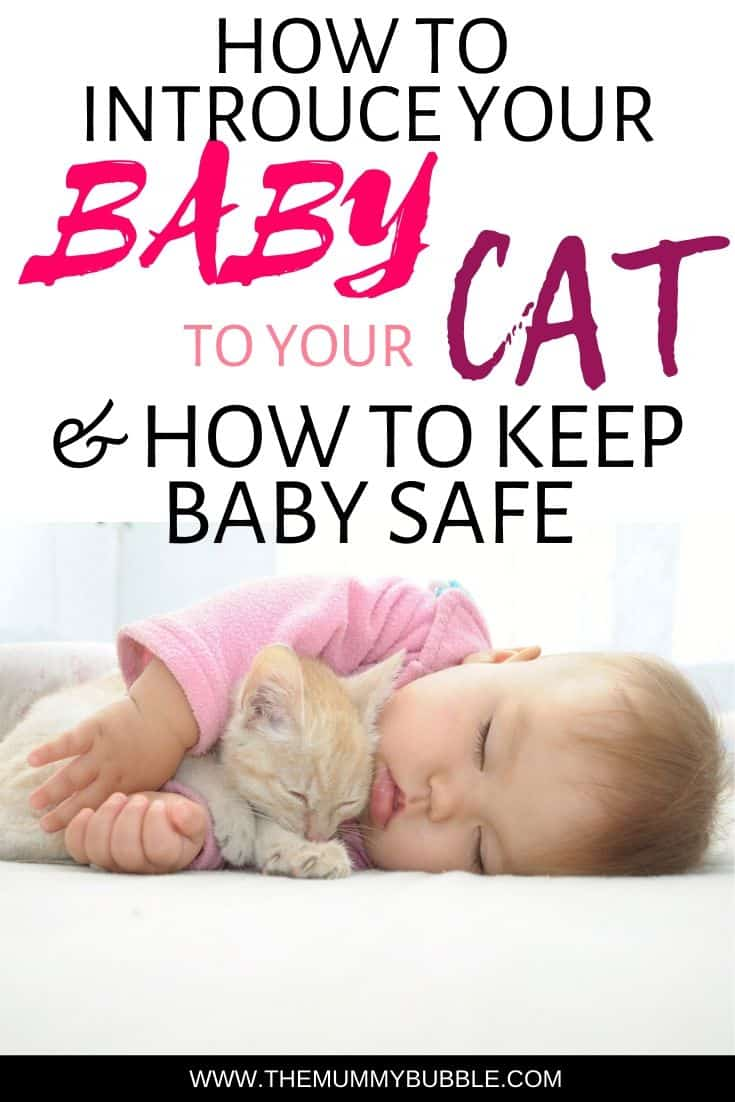 How to introduce your baby to your cat and keep baby safe around your cat